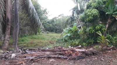 ที่ดิน 4000 ตรัง กิ่งอำเภอหาดสำราญ หาดสำราญ